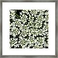 Queen Anne's Lace Patterns Framed Print