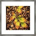 Radiant Beech Leaf Branches Framed Print