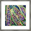 Rainbow Corn Framed Print