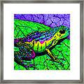Rainbow Frog 2 Framed Print