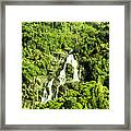 Rainforest Rapids Framed Print
