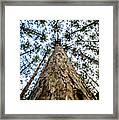 Reach New Heights Framed Print
