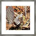 Real Cactus In An Actual Desert  Framed Print