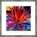 Red Agave Framed Print