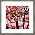Red Aspen II Framed Print
