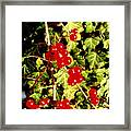 Red Berries And Ivy Framed Print