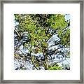 Red Cardinal In Tree Framed Print