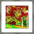 Red Chinese Maple Leaf's Framed Print
