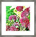 Red Dahlias Framed Print
