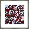 Red Fall Colors Framed Print