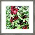 Red Hollyhocks Framed Print