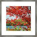 Red Maple On Lake Shore Framed Print