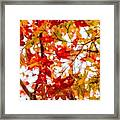 Red On A Tree Framed Print