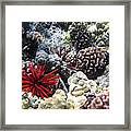 Red Slate Pencil Urchin Framed Print