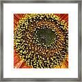 Red Sunflower Macro Framed Print