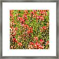 Red Texas Wildflowers Framed Print