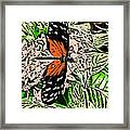 Red Winged Butterfly Framed Print
