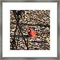 Redbird And American Golden Finch Framed Print
