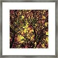 Rediscovering The Light In The Ordinary Framed Print