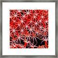 Reef Art - Octocoral Framed Print