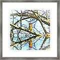 Refection Of Cedar Waxwing Framed Print