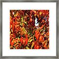 Reflection Of The Season Framed Print