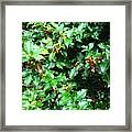Refreshing Green Framed Print