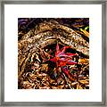 Resting In The Crook Framed Print