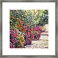 Rhododendron Pathway Exeter Gardnes Framed Print by David Lloyd Glover