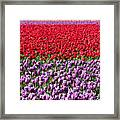 Ribbons Of Color Framed Print