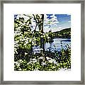 River View Through Flowers. On The Bridge Of Flowers. Framed Print