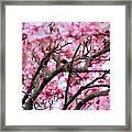 Robin In Magnolia Tree Framed Print