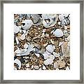 Rock N Shells Framed Print
