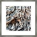 Roots Of Ostia Antica Framed Print