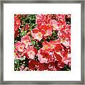 Rose Garden Pink Roses Botanical Landscape Baslee Troutman Framed Print