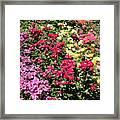 Rose Hill Framed Print