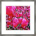 Rose Red 2 Framed Print
