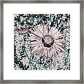 Rose Wine Daisies Framed Print