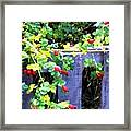 Rustic Fence And Wild Rosehips Framed Print