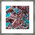 Sakura Framed Print