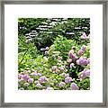 Pink Hydrangeas In Mirabell Garden Framed Print