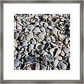 Sanibel Island Seashells I Framed Print