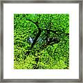 Sapes In Nature Framed Print