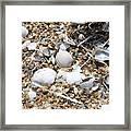 Sea Ribbons And Shells Framed Print