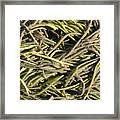 Sea Weed Cluster Framed Print