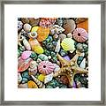 Seashells 3 Framed Print