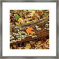 Seashells In The Forest Framed Print