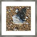 Seashells On The Seashore Framed Print