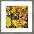 Seasons Change Framed Print