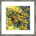 Seaweed On Rock In Ocean Framed Print
